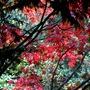 Autumn_041