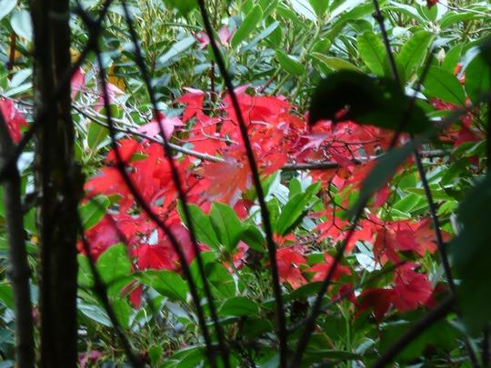Autumn 043