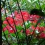 Autumn_043