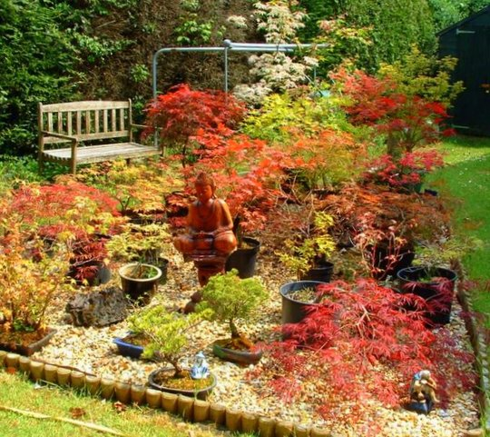 Some of our Acers