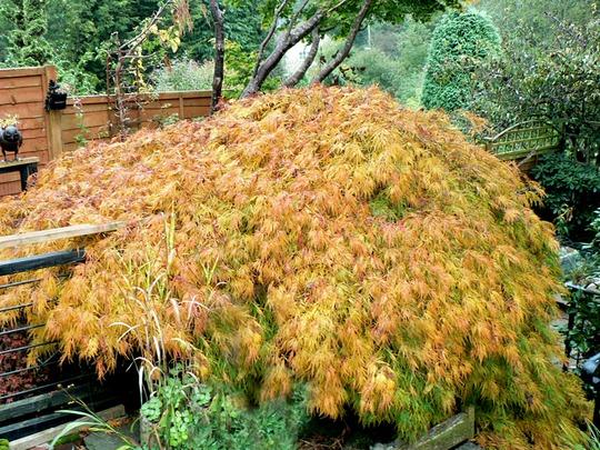 Autumn1 015