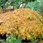 Autumn1_015