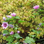 Zahrada_koniec_oktbra_024