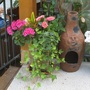 Annuals_on_the_patio