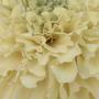 2008_07_01_037_marigold