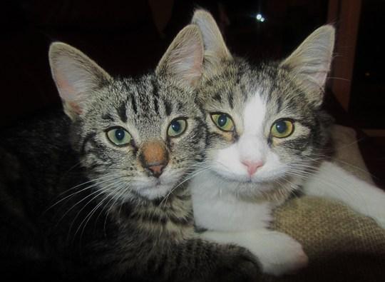 Ruby & Pearl, having a snuggle...