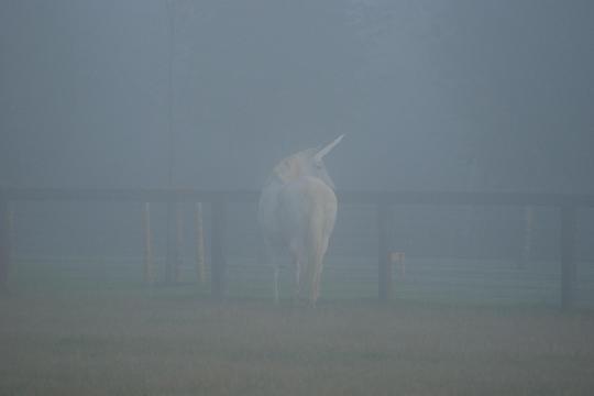 A Unicorn?!
