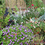 End-of-Spring Downunder -  Courtyard Garden potted plants