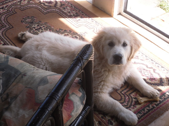 My Gorgeous Puppy Loki