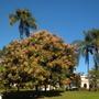 Balboa_park_11_13_12_10_