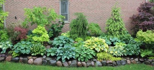 North side garden bed