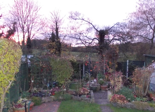 The Garden in November