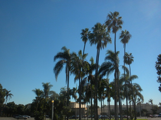 Queens, Kings and Mexican Fan Palms  (Queens, Kings and Mexican Fan Palms)