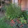 Balboa_park_11_13_12_77_