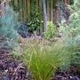 'Prairie Fire' (Carex testacea)