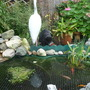 Pond & Black Cat