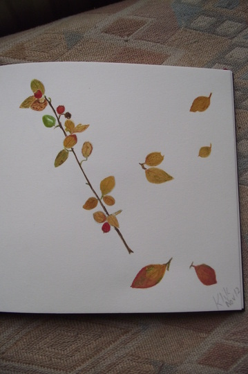 water colour of my cotoneaster Simonsii (Cotoneaster simonsii (Himalayan Cotoneaster))