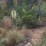 Garden island November 24th