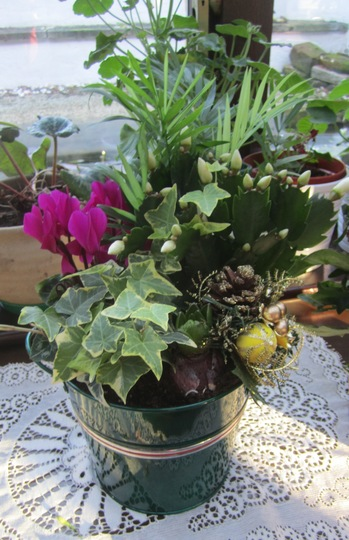 Plant arrangement from the Nursery.