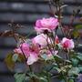 Rosa_Handel.jpg