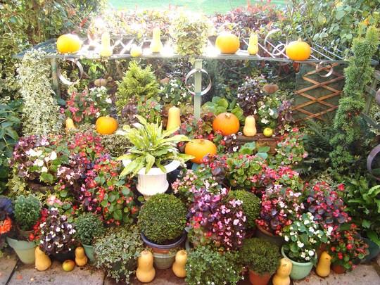 November pumpkins.