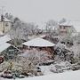 Snow in the Back Garden.