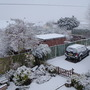 Snow in the Front Garden