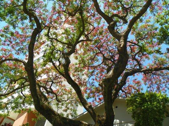 Sky through the tree
