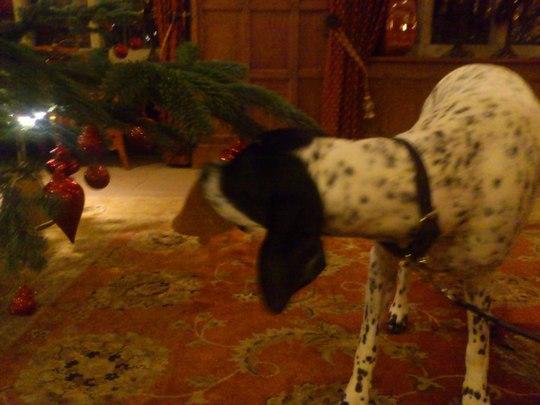 Sluggy's Christmas bonus!