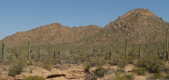 The Sonoran Desert in Arizona