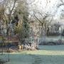 Frosty_december_2012_004