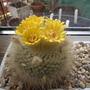 Cacti_flowers_2012_004