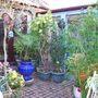 my garden in 2009