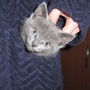 Pocket_full_of_kitten