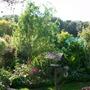 Garden_in_spring09_42_