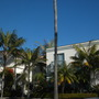 Kentia Palms (Howea fosteriana) in front of nice house (Kentia Palms (Howea fosteriana))