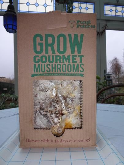 growing gourmet mushrooms  -050113
