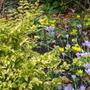 February in my old garden