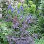 June in my old garden
