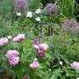 June in my old garden II