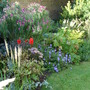 The long border in my old garden