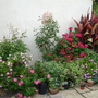 Tender collection on the back terrace!