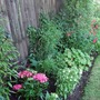 Newly_planted_border_1