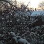 Icy drops on Nandina . . .