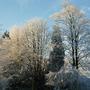 sun on snowy trees  . . .
