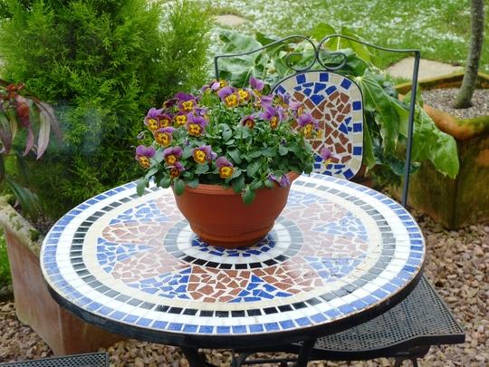 Pot of Violas again....
