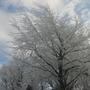 Frosted trees at the top of the garden...