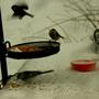 Snowbirds_2013_028