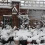 Snow_18.1.13_008