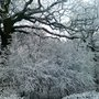 Beautiful Whiteswood Wood - all dressed in white